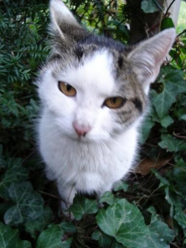 caty.jpg