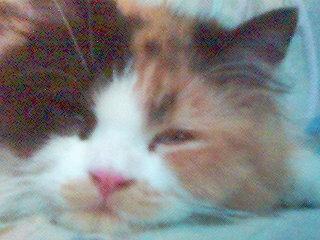 kitttyy080613.jpg