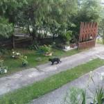 Fekete22010-08-08