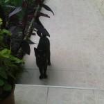 Fekete32010-08-08