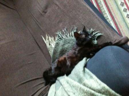 fekete kandúr cica