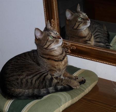 Macsi tükör