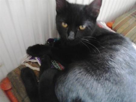 Nyitra ÁBC környékén találtuk a nagyon barátságos cicát. Várja gazdiját. Érd. 20/3425462 számon.