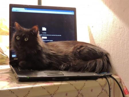 Hédi és a számítógép