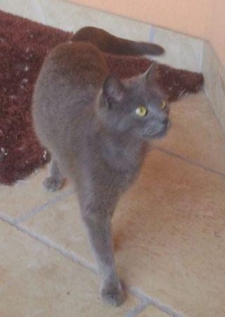 macska kép2