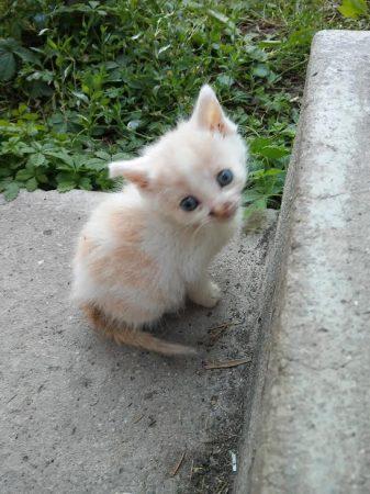 lány cica